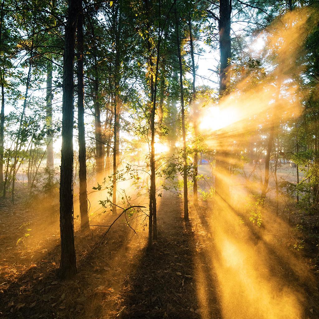 Summer Wallpaper Iphone 6 Nr18 Forest Wood Light Sun Summer Nature Wallpaper