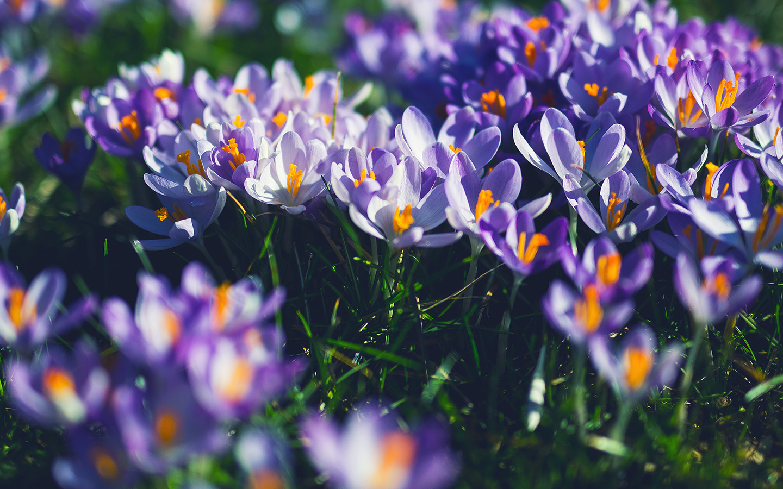 Minimal Wallpaper Car Nw04 Flower Purple Spring Nature Wallpaper