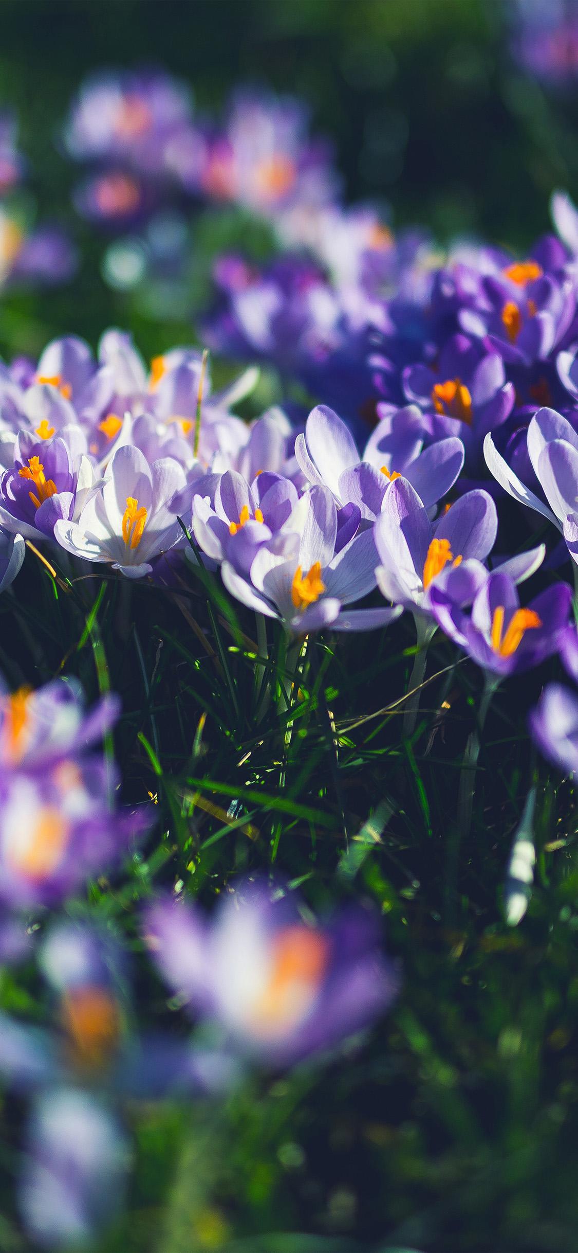 Cute Butterfly Wallpaper Hd Nw04 Flower Purple Spring Nature Wallpaper