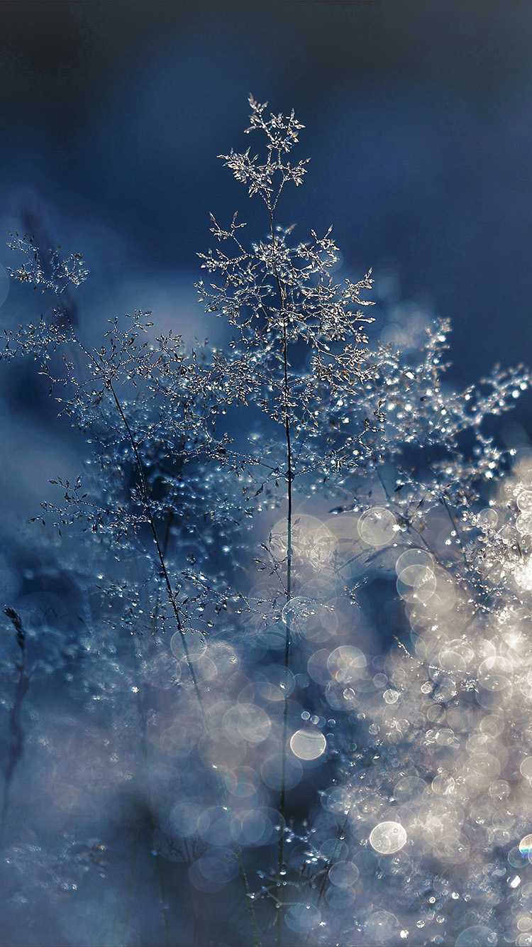 Blue Wallpaper Iphone 6 Nw53 Snow Bokeh Light Beautiful Nature Blue Wallpaper