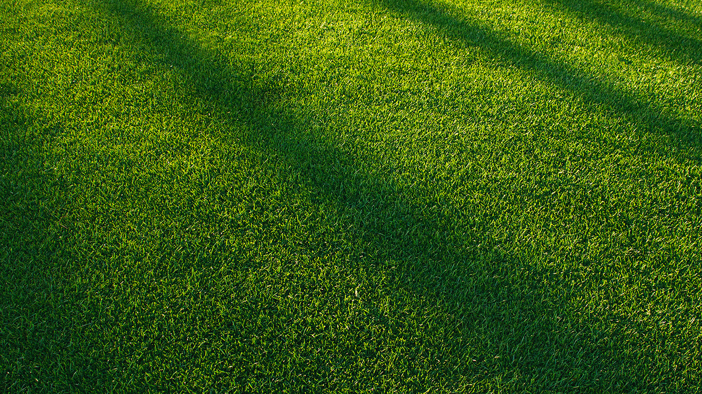 Fall Texture Wallpaper Vj85 Lawn Grass Sunlight Green Pattern Papers Co