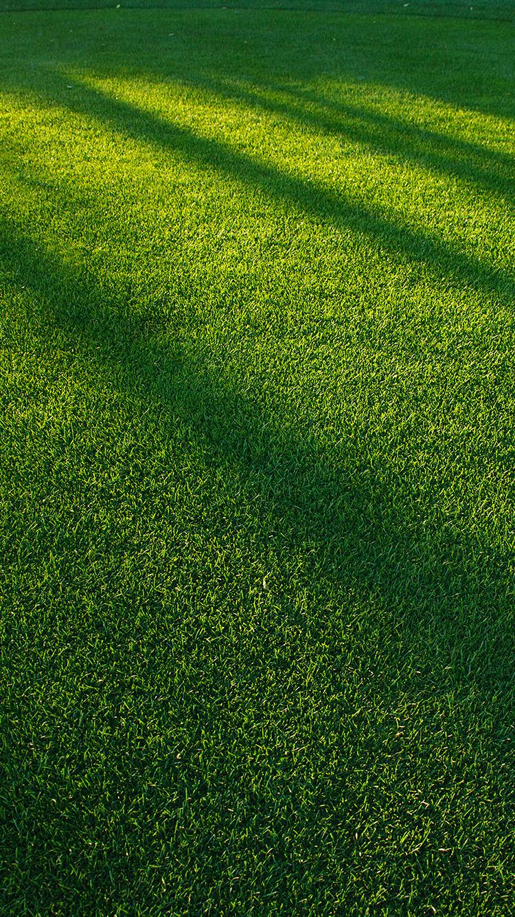 Iphone Wallpaper Hd Sports Vj85 Lawn Grass Sunlight Green Pattern Papers Co