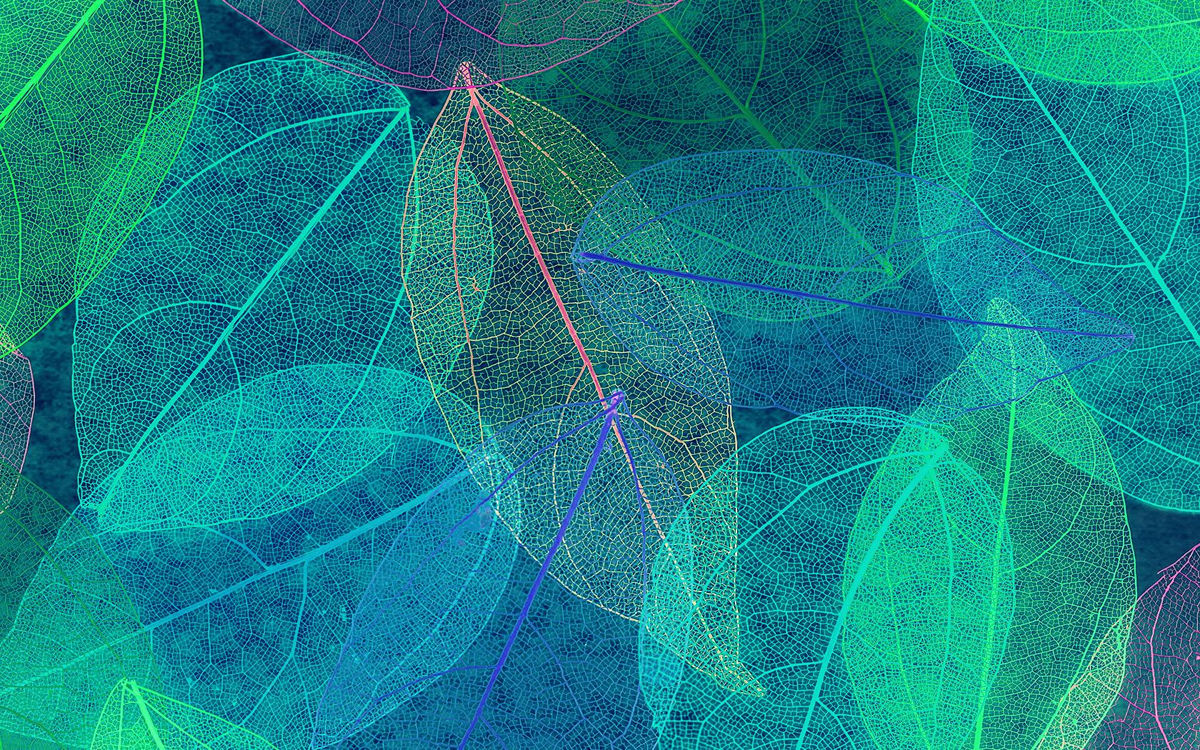 Download Fall Wallpaper For Laptops Wallpaper For Desktop Laptop Vm24 Color Blue Leaf Art