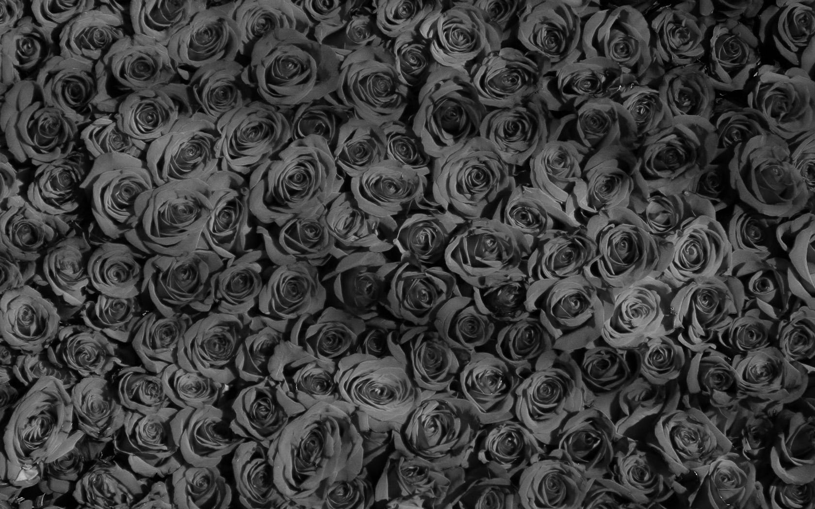 Animal Pattern Wallpaper Vo45 Rose Dark Bw Pattern Wallpaper