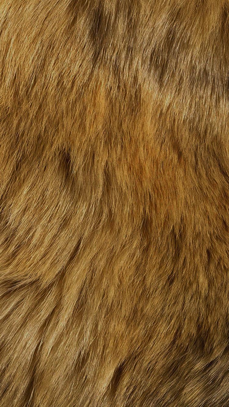 Iphone 6 Orange Flower Wallpaper I Love Papers Vt37 Texture Fur Dog Orange Pattern Gold