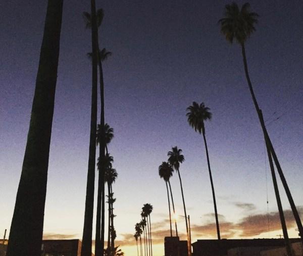 Van Nuys LA palm trees