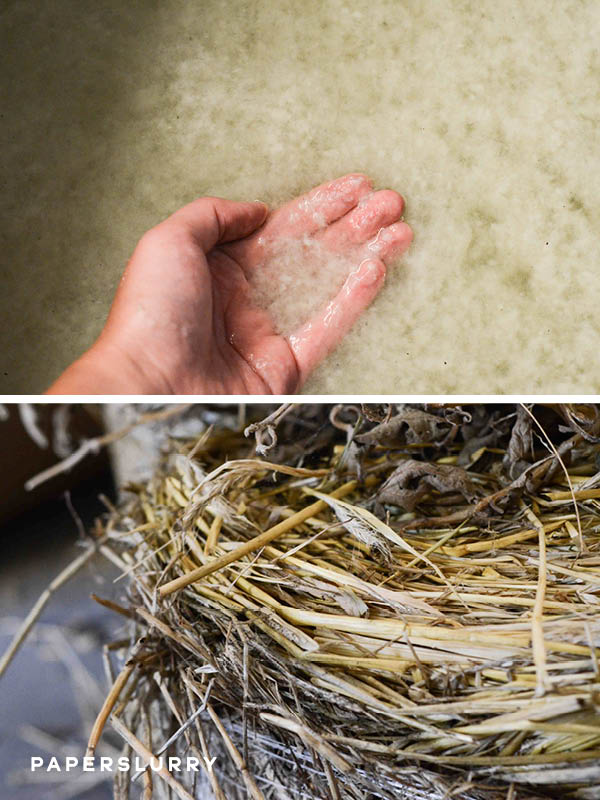Hand papermaking from farm and agricultural plants at Fresh Press