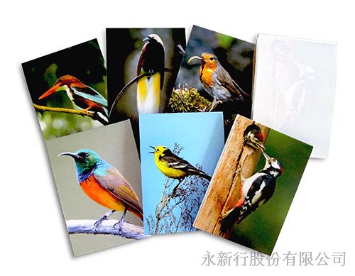 動物便條系列鳥便條紙-便條紙_M-14447,0