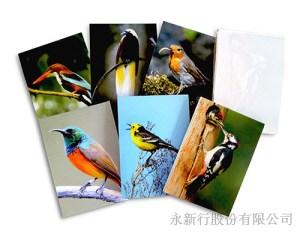 動物便條系列鳥便條紙-便條紙_M-14447,2