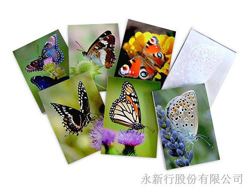 動物便條紙蝴蝶-便條紙_M-14435