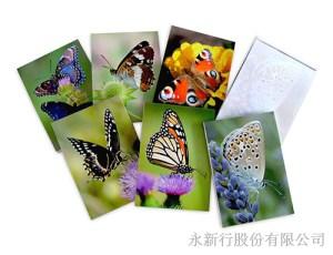 動物便條紙蝴蝶-便條紙_M-14435,2