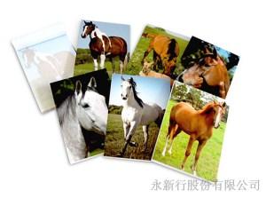 動物便條系列馬-便條紙_M-14441,2
