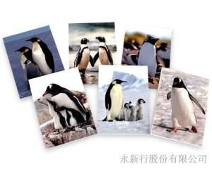 動物便條系列企鵝-企鵝便條紙M-14453,2