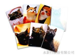 動物便條系列貓便條紙-貓便條紙M-14424,2