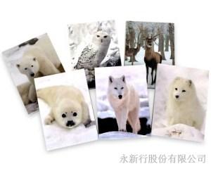 動物便條系列Polar_Animals便條紙-M-14452,2
