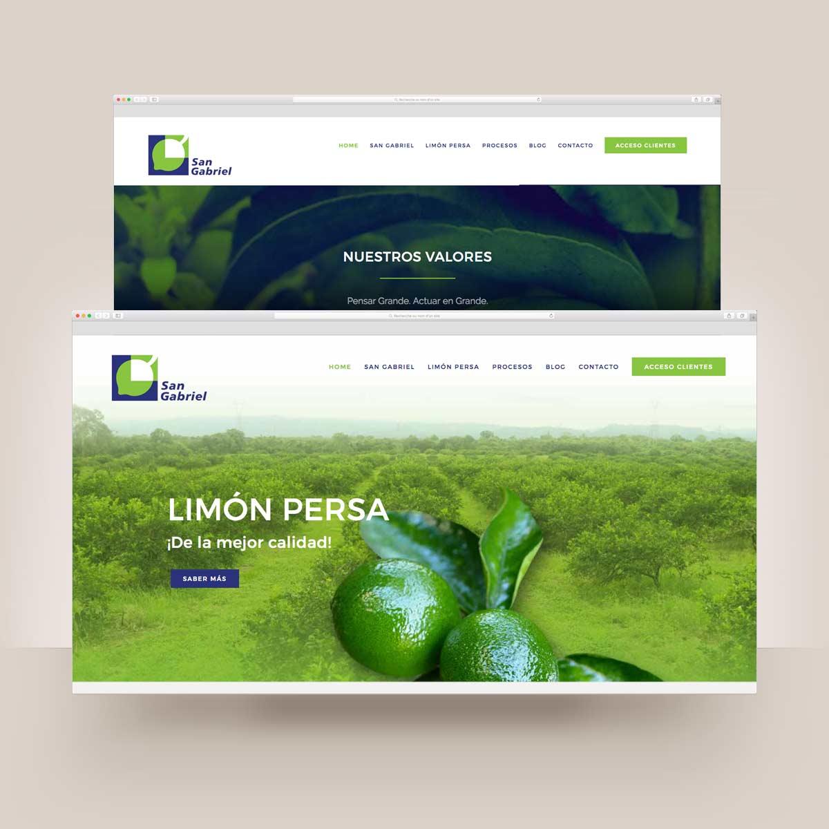 San Gabriel exportador y productor de limon persa
