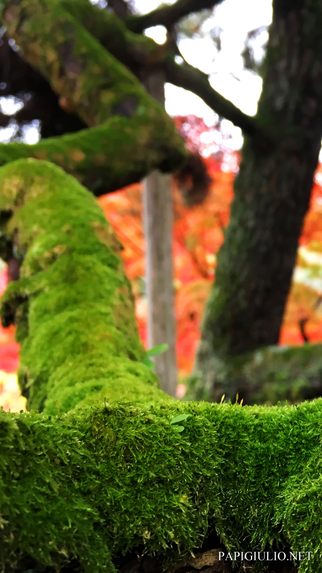 Free Japanese iPhone wallpaper download Kyoto Autumn