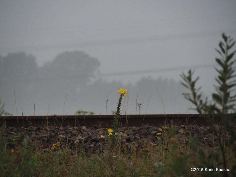 bloem in mist