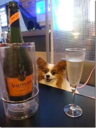神奈川県藤沢市のペット同伴可のバースタイルのレストランバッカスのワインと愛犬パピヨンのアリア