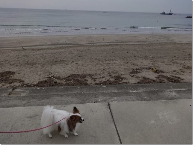 海岸を歩くアリア