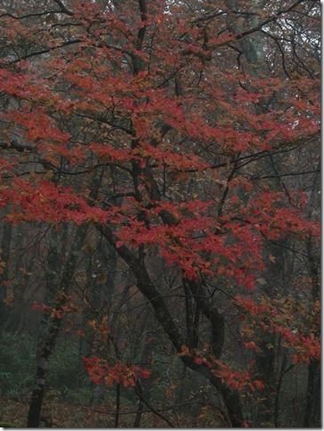 頂上の紅葉