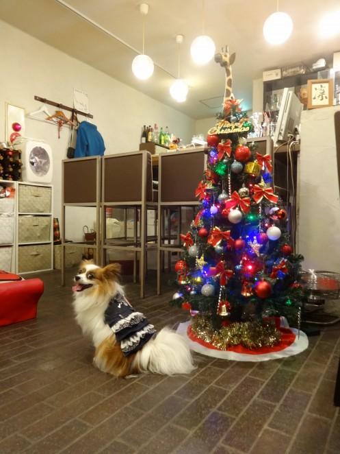 クリスマスツリーの前でポーズするアリア