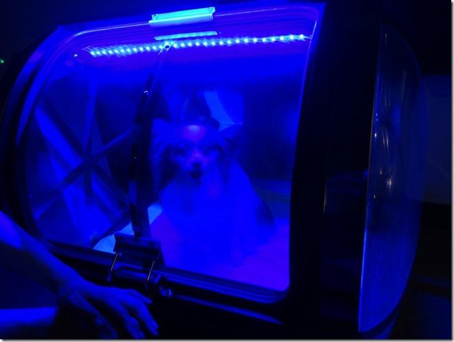 酸素カプセルの中のアリア