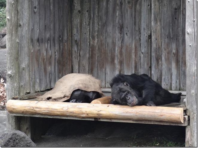 ビリー君と蒲団を被って寝るココちゃん