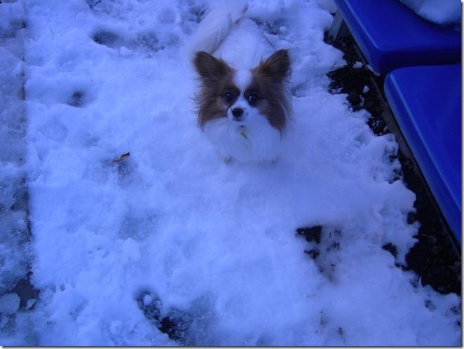雪の上のアリア