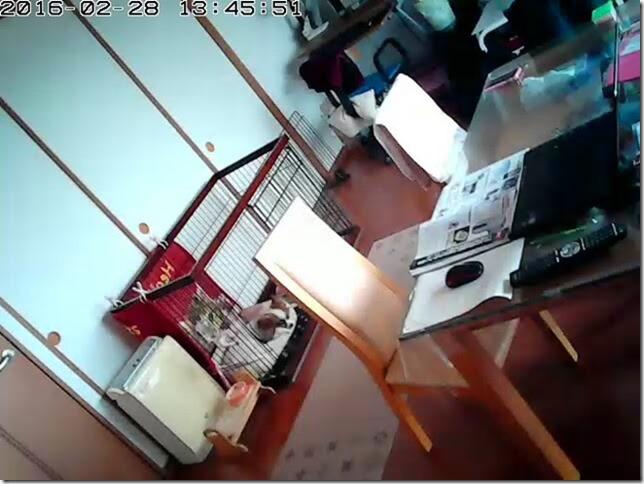 スマホ対応ネットワーク監視カメラPLANEXCS-QR10で撮影した監視映像例