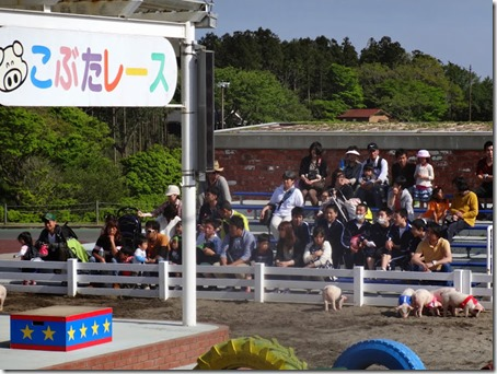 ペット(犬)と遊べる千葉県のマザー牧場で行われていたこぶたレース