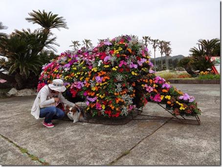 千葉県のペットと遊べるポピーの里館山ファミリーパークのデザイン植え込み