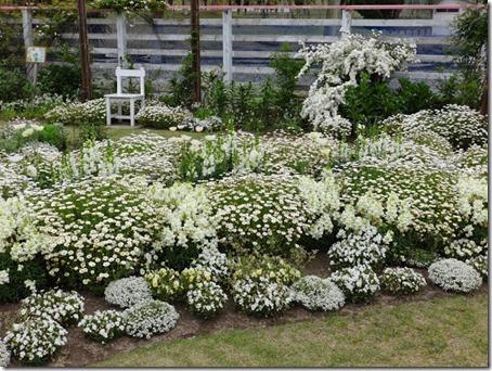 千葉県のペットと遊べるポピーの里館山ファミリーパークのホワイトガーデン3枚目