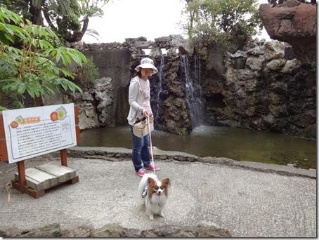 千葉県のペットと遊べるポピーの里館山ファミリーパークの滝