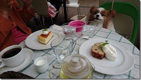 みなとみらい線元町・中華街駅からすぐの元町スローカフェのデザートを見て食べたそうな表情をする愛犬パピヨンのアリア
