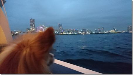 シーバスのデッキで横浜みなとみらいの夜景に魅入る愛犬パピヨンのアリア