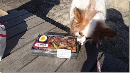 東名高速道路足柄サービスエリアで買った牛肉弁当と我が家の愛犬パピヨンのアリア