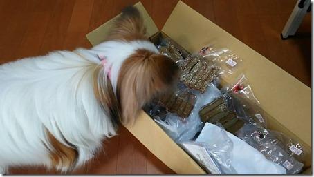 まだ未開封のみよしのドッグじゃこ天のにおいをかぐ我が家の愛犬パピヨンのアリア