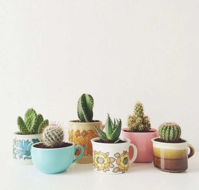 Stunning Diy Succulents For Indoor Decorations 17