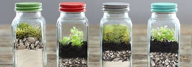 Awesome Bonsai Terrarium On The Jars Featured
