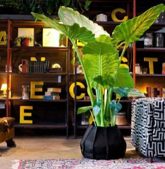 Best Indoor Plants Decor For Air Purify Apartment And Home 12
