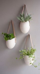 Best Indoor Plants Decor For Air Purify Apartment And Home 2