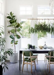Best Indoor Plants Decor For Air Purify Apartment And Home 3