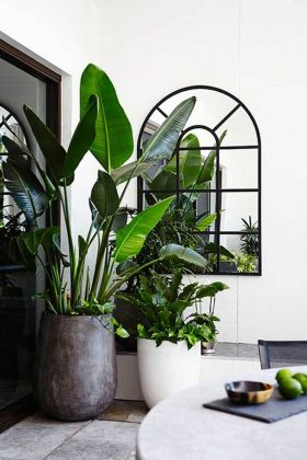 Best Indoor Plants Decor For Air Purify Apartment And Home 42