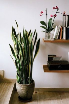 Best Indoor Plants Decor For Air Purify Apartment And Home 45