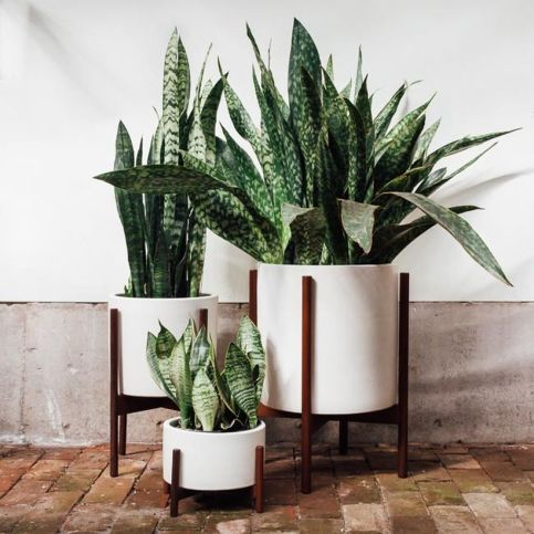 Best Indoor Plants Decor For Air Purify Apartment And Home 46