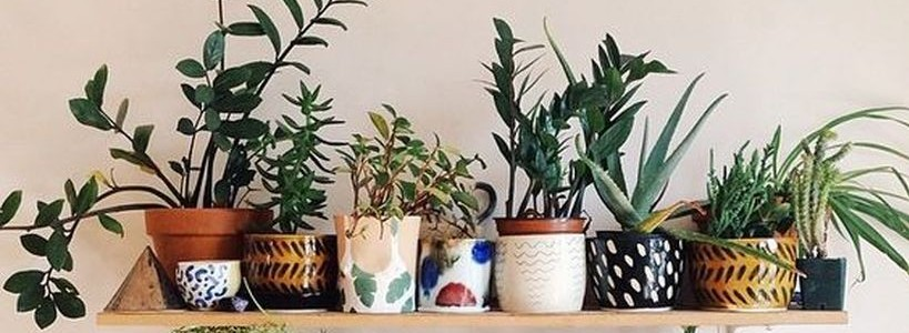 Best Indoor Plants Decor For Air Purify Apartment And Home Featured