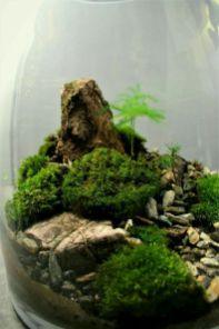 Bonsai Terrarium For Landscaping Miniature Inside The Jars by Meandry Natury