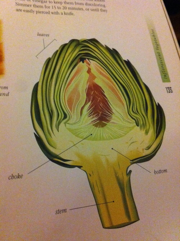 medium resolution of artichoke 001