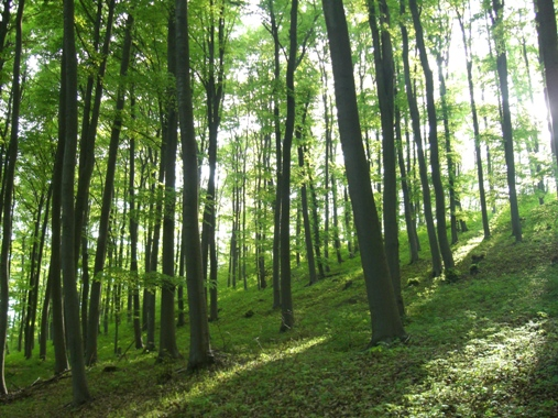 Göttinger Wald (Westerberg) bei Klein Lengden